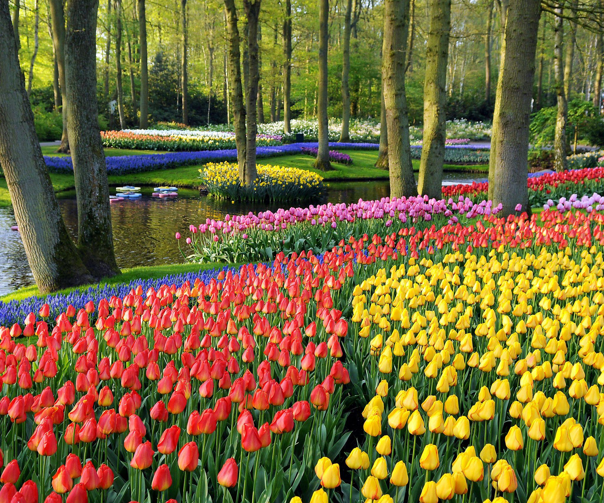 Keukenhof Tulips Garden
